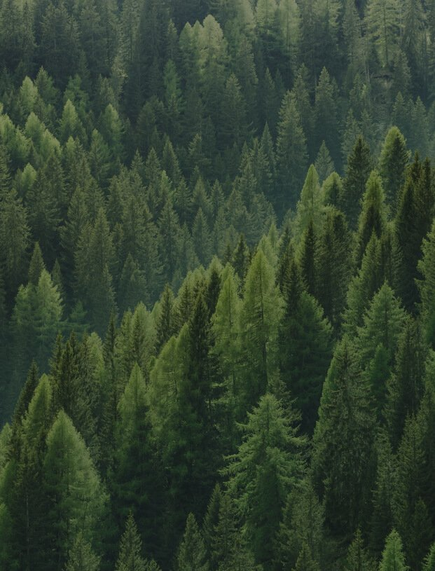 Aerial shot of healthy green spruce forest
